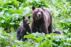 The mamma bear and the baby bear were of course stars of the bear show