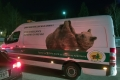 Bear ambulance with a live bear at serbian-bulgarian border