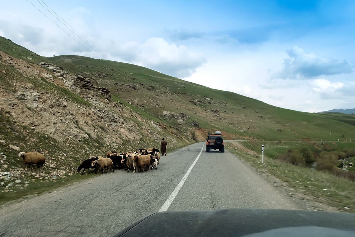 Livestock is essential for survival in the mountains. This flock of sheep was actually rather a small one, though most of it was already high above the road.