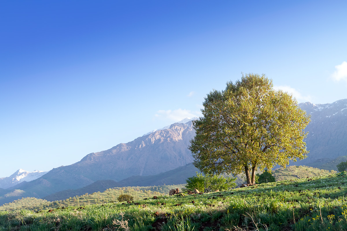 We woke to the beautiful fresh morning after a rainy day in Kurdish mountains.