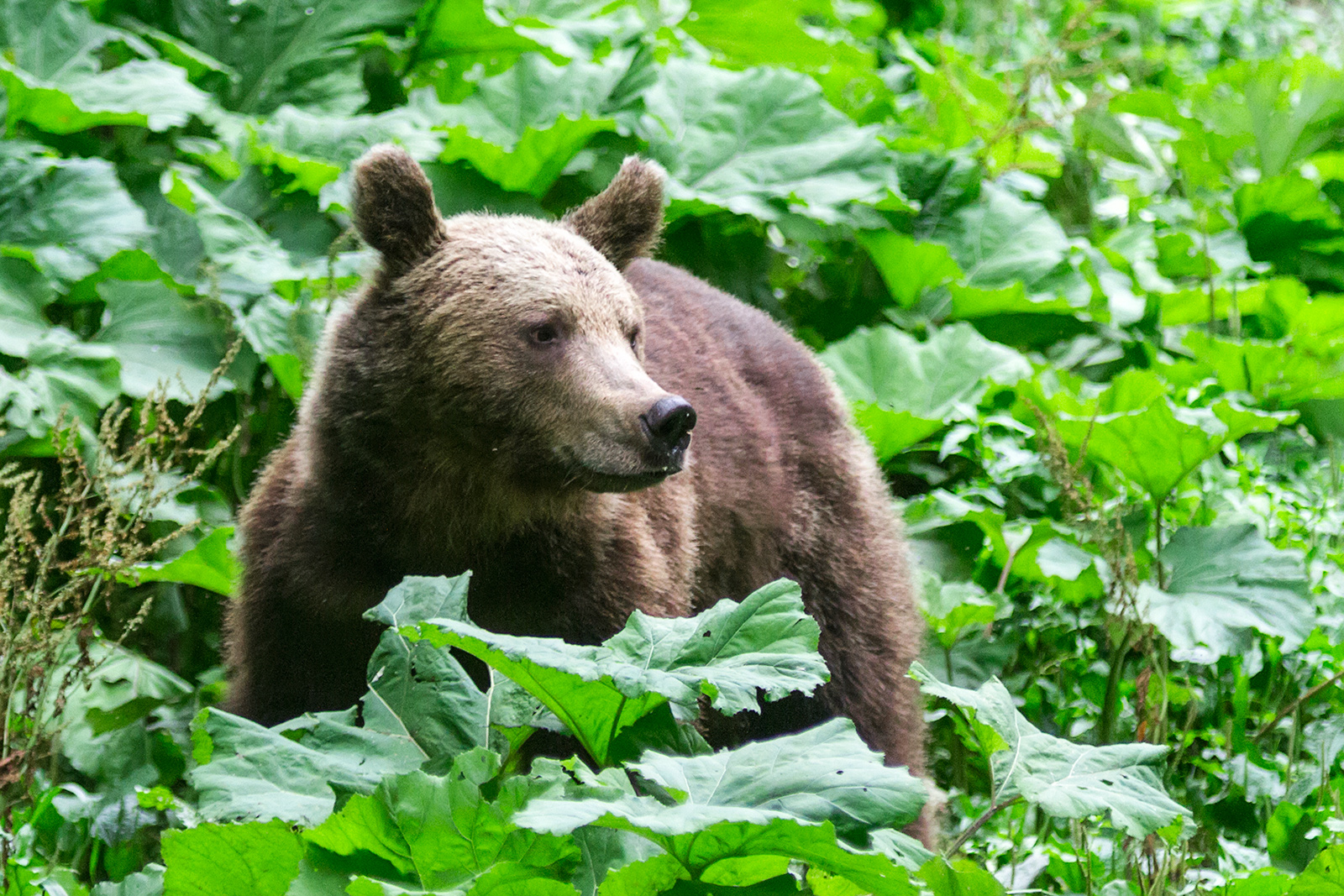 The bears came less than 20 meters to the hide