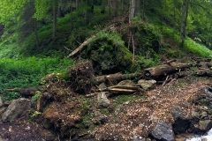 The beautiful woods of upper Stramba Valley