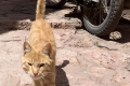 The ginger cat from Abyaneh