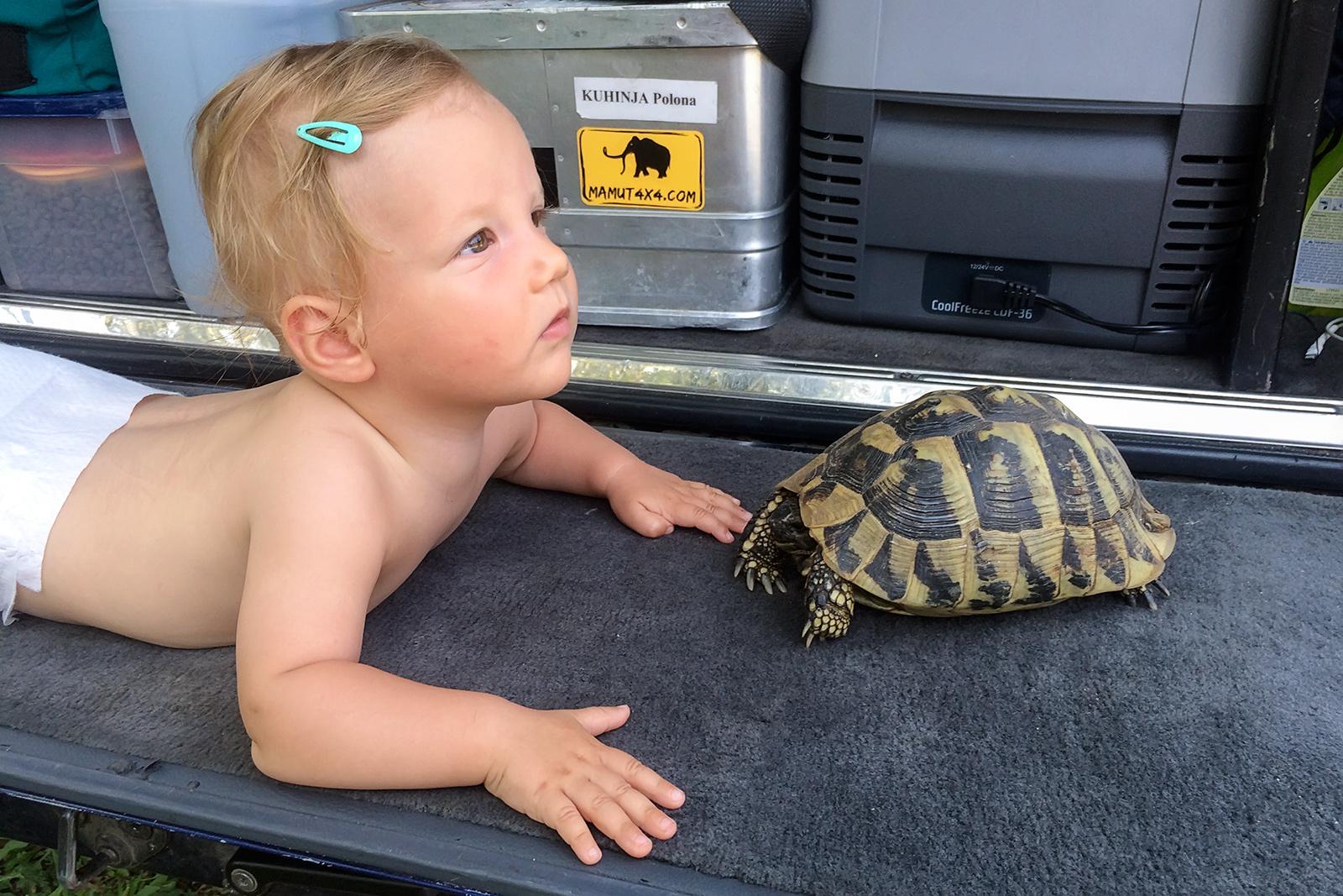 Kea Pika meeting the tortoise in Bulgaria.