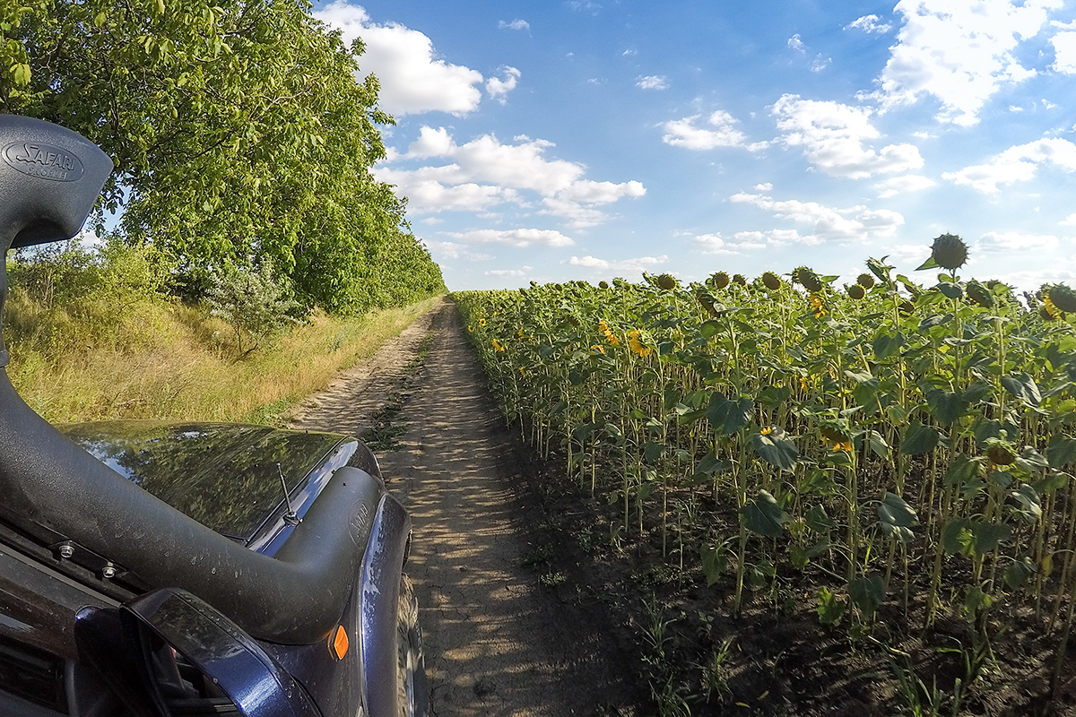 Pot med orehi in sončnicami blizu Starega Orheja.