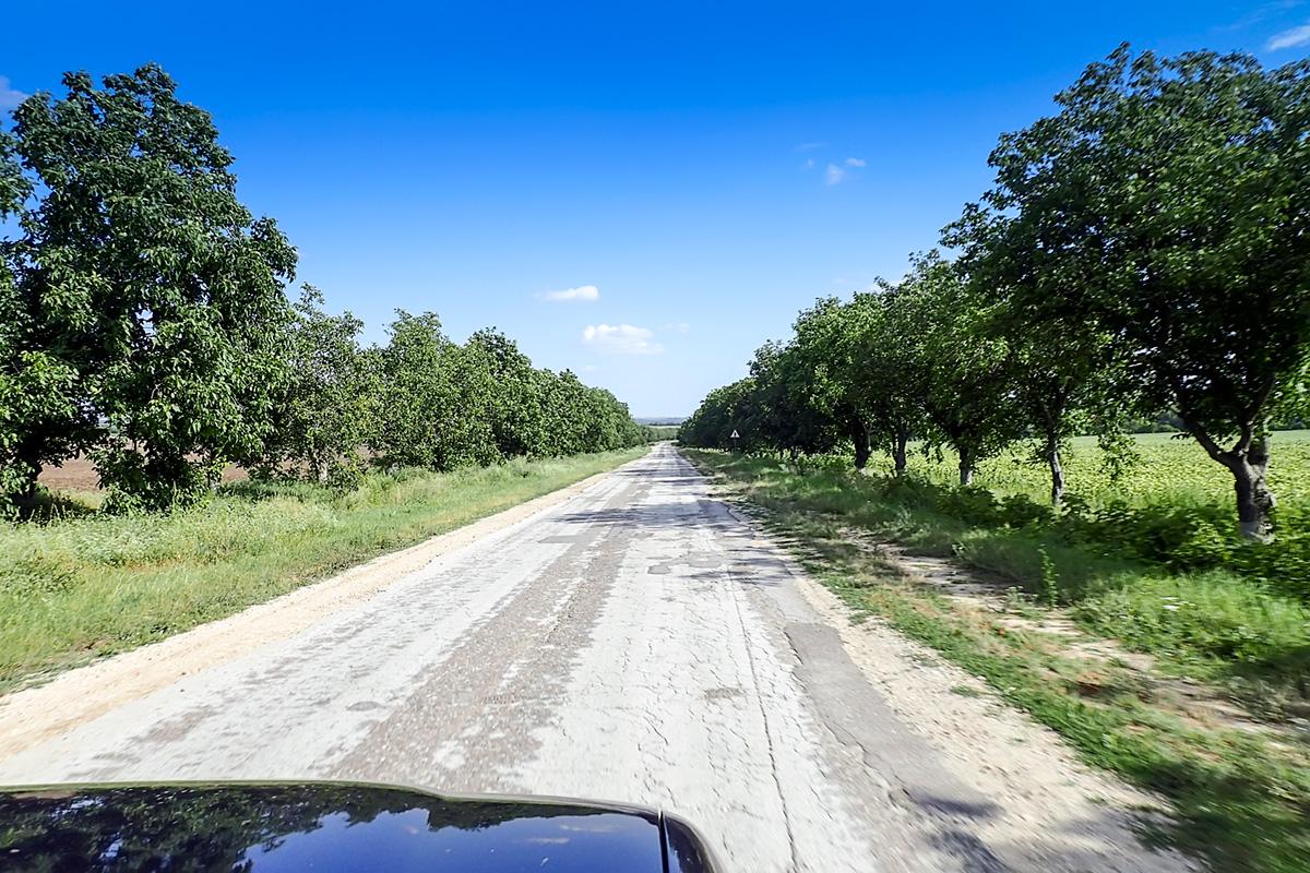 Drevoredi orehov na obeh straneh dotrajane ceste.